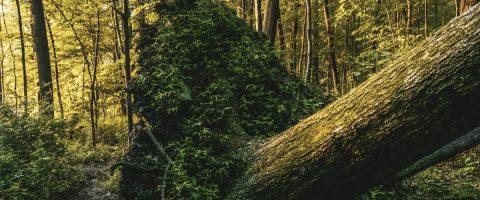 אחריות רשות מקומית לנזקי גוף כתוצאה מנפילת עץ